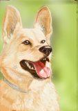 dog1-scaled
